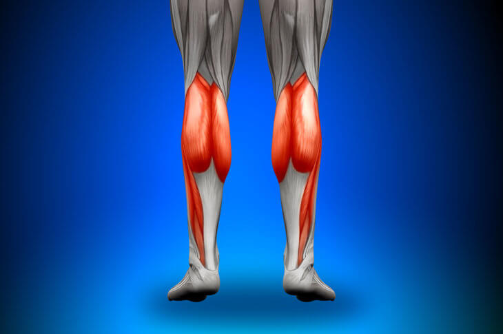 Calves Muscles Anatomy