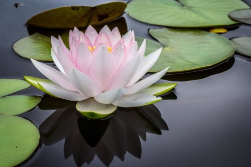 Yoga Lotus Flower